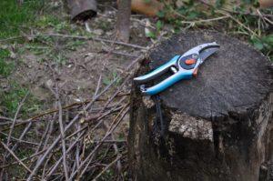 appelboom snoeien met scherp gereedschap