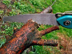 boomzaag voor dikke takken snoeien naaldboom