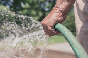 geef catalpa extra water bij warm weer