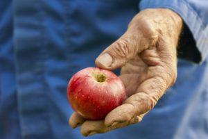 oogst de appelboom in augustus t/m september