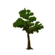 amberboom snoeien