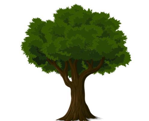 beukenboom snoeien