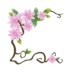 magnolia snoeien