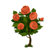 rozenstruik snoeien
