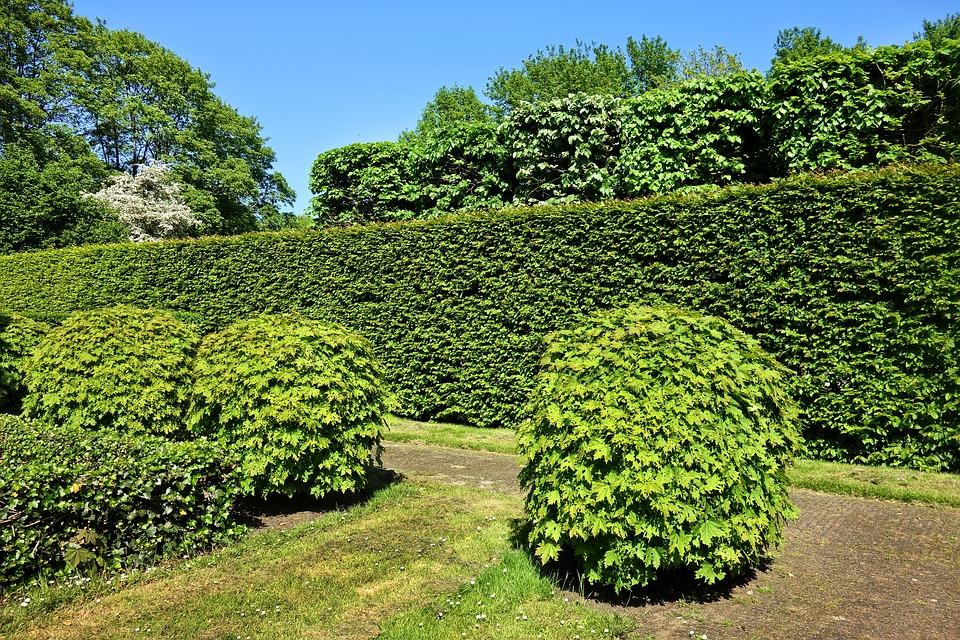 Tuin Hagen Soorten : Alle verschillende soorten hagen op een rij snoeien