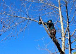 welke bomen snoeien in november